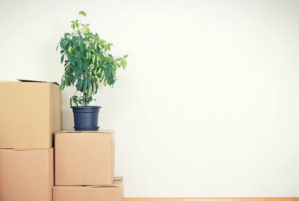 déménager ses plantes