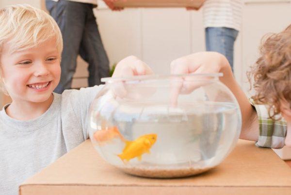 déménager un aquarium